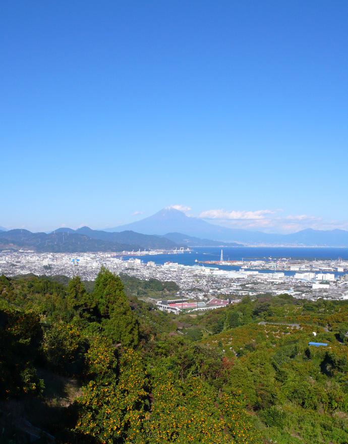 みかん富士